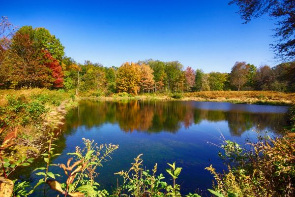 CP_Nature_Fall-1