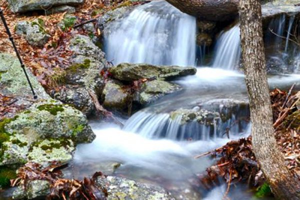 CP_Nature_Fall-13