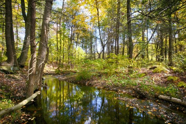 CP_Nature_Fall-3
