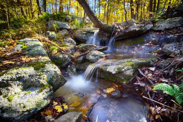 CP_Nature_Fall-6