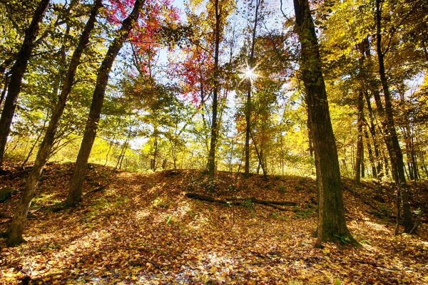 CP_Nature_Fall-8