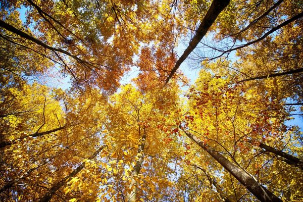 CP_Nature_Fall-9